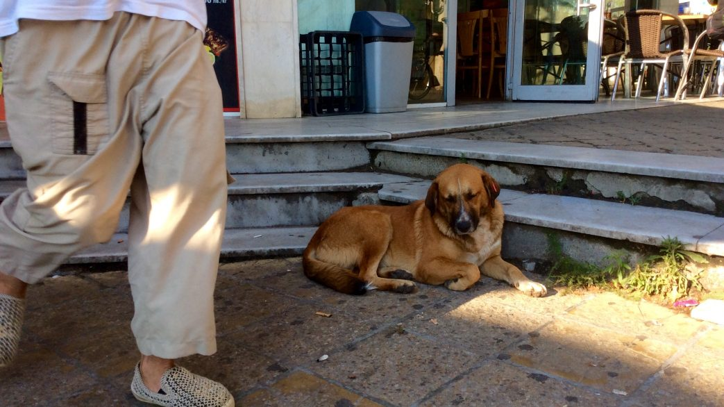 Straßenhund liegt gemütlich am Boden